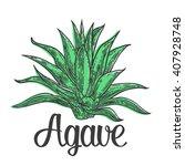 Cactus Blue Agave. Vintage...
