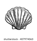 sea shell scallop. black... | Shutterstock .eps vector #407974063