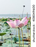 beautiful lotus flower in... | Shutterstock . vector #408049600