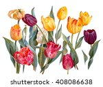 colorful tulips  isolated on... | Shutterstock . vector #408086638