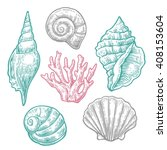 Sea Shell And Coral.  Nautilus...