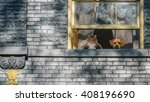 Stock photo a cat and a dog looking out a window of a brick victorian home 408196690