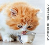 Beautiful Kitten Drinking Wate...