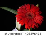 Picture Of Red Daisy Gerbera...