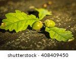 Green Acorn Fell From The Tree