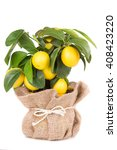 Lemon With Ripe Fruits In A Po...