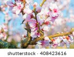 blooming peaches pink flowers... | Shutterstock . vector #408423616