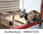 the cat sat on the window sill  | Shutterstock . vector #408447370