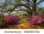 south carolina spring flowers... | Shutterstock . vector #408585736