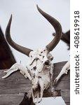 skull of animal | Shutterstock . vector #408619918