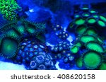 corals in the aquarium light... | Shutterstock . vector #408620158