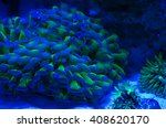 corals in the aquarium light... | Shutterstock . vector #408620170