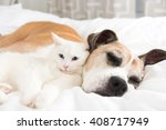 Stock photo white cat loving boxer mix dog sleeping together on bed 408717949