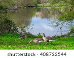 Geese At The Water