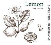 hand drawn vintage lemon plant. ...   Shutterstock .eps vector #408745348