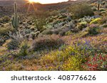 Blooming Sonoran Desert...