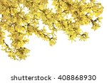 Twigs Of Forsythia With Yellow...
