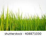 paddy rice in green  | Shutterstock . vector #408871030