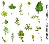 set of watercolor field flowers ... | Shutterstock . vector #408888796