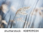 Beautiful Serene Waving Reed I...