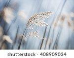 Beautiful Serene Waving Reed I...