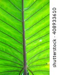 Small photo of alocasia macrorrhizos LEAF