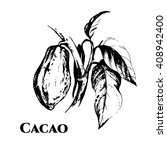 hand drawn theobroma cacao... | Shutterstock .eps vector #408942400