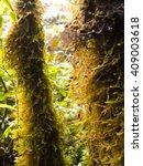 moss tree | Shutterstock . vector #409003618