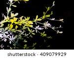 leaf is mix in bokeh | Shutterstock . vector #409079929
