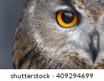 Portrait Of Eagle Owl With...