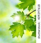 green leaves on the summer...   Shutterstock . vector #409297618