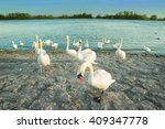 swans in anticipation of... | Shutterstock . vector #409347778