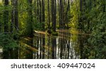 swamp with trees and reflection ...