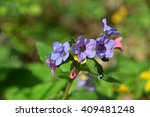 forest colorful spring flowers... | Shutterstock . vector #409481248