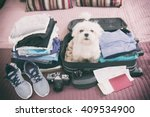 Stock photo small dog maltese sitting in the suitcase or bag wearing sunglasses and waiting for a trip 409534900