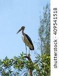 Small photo of Conservation of birds on the tree. Lesser adjutant stork (Leptoptilos javanicus)