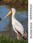 Small photo of African Spoonbill Stork Wild Bird Background from Africa.