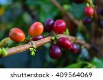 blur fresh coffee seeds on a... | Shutterstock . vector #409564069