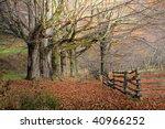 Beautiful Fall Scene With...