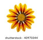 beautiful flower isolated on...   Shutterstock . vector #40970344