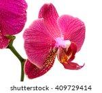 Beautiful Phalaenopsis Blume...