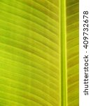 Close Up Of Fresh Banana Leaf ...