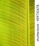 Close Up Of Fresh Banana Leaf ...