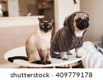 Stock photo pug and siamese cat at table in living room 409779178