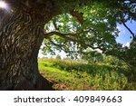 Old Oak Tree In Kvepene  Latvia