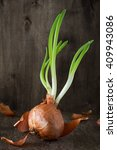 onion bulb with chives fresh... | Shutterstock . vector #409943086