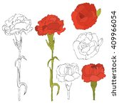 Carnation Flowers Collection....