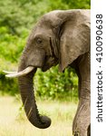 Small photo of Profile head shot of a wild african elephant