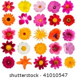flowers  decorative  collection | Shutterstock . vector #41010547