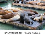 Fisherman's Wharf Sea Lions